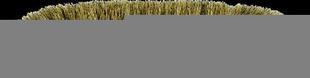 Balai demi-tête soie naturelle semelle polypropylène teintée bois 30cm - Gedimat.fr
