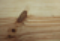 Parquet pin des landes brut ép.23mm larg.100mm long.2,00m choix noueux - Gedimat.fr