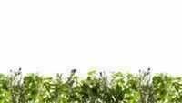 Crédence verre trempé ép.6mm larg.90cm haut.70cm blanc herbe - Gedimat.fr