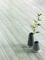 Sol stratifié SOLID MEDIUM ép.12mm larg.122x long.1286mm chêne Chêne polaire - Gedimat.fr