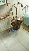 Carrelage pour sol en grès cérame émaillé CASABLANCA dim.60x60cm coloris crème - Carrelages sols intérieurs - Cuisine - GEDIMAT