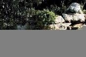 Alarme par immersion avec télécommande - Sécurités piscine - Aménagements extérieurs - GEDIMAT